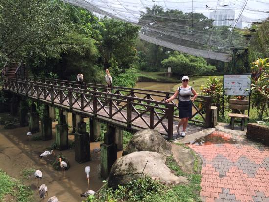 پارک پرندگان کی ال