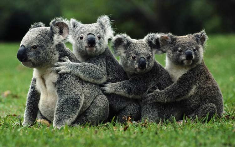 دانستنیهای استرالیا - دانستنیهای جالب کشور استرالیا