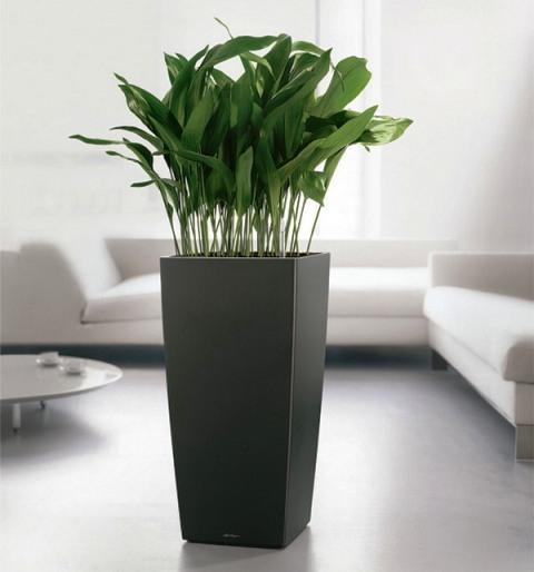 راهنمای خرید گلدان