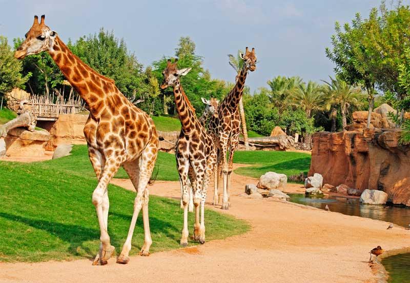 باغ وحش والنسیا - شهرهای اسپانیا