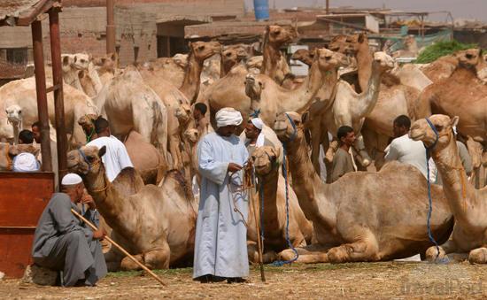 بازار شتر - مراکز خرید در مصر