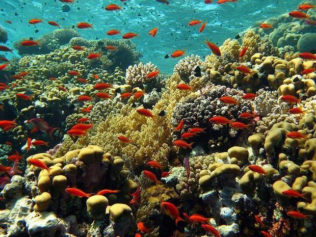 دریای سرخ - اماکن تفریحی مصر