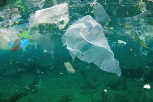 ئئئ 300x200 - کمک به کاهش آلودگیهای پلاستیکی با طراحی دیوار دریایی در سیدنی