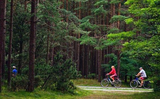 پارک سوکولنیکی مسکو 5 - پارک سوکولنیکی مسکو روسیه