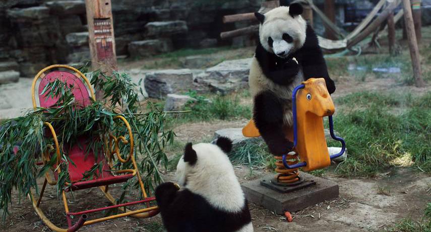 باغ وحش پکن 1 - باغ وحش پکن چین