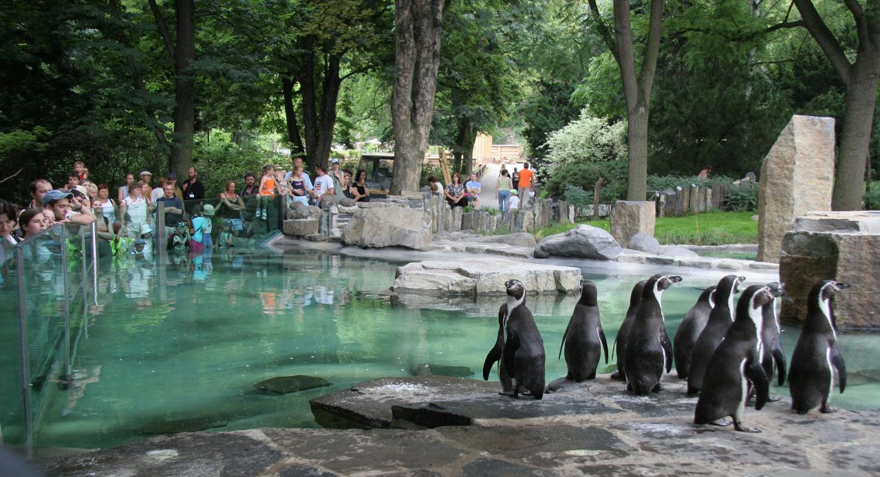 باغ وحش پکن 2 - باغ وحش پکن چین