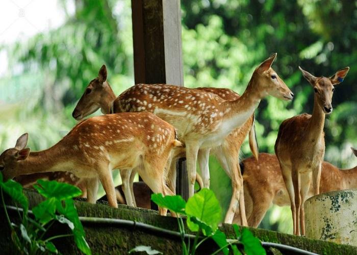 باغ گیاه شناسی پردانا 1 - باغ گیاه شناسی پردانا کوالالامپور مالزی