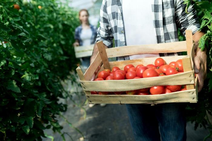 برنامه مهاجرتی صنایع غذایی در کانادا - برنامه مهاجرتی صنایع غذایی در کانادا