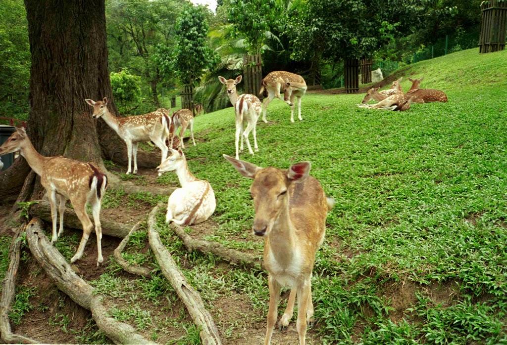 پارک آهوها کوالالامپور مالزی
