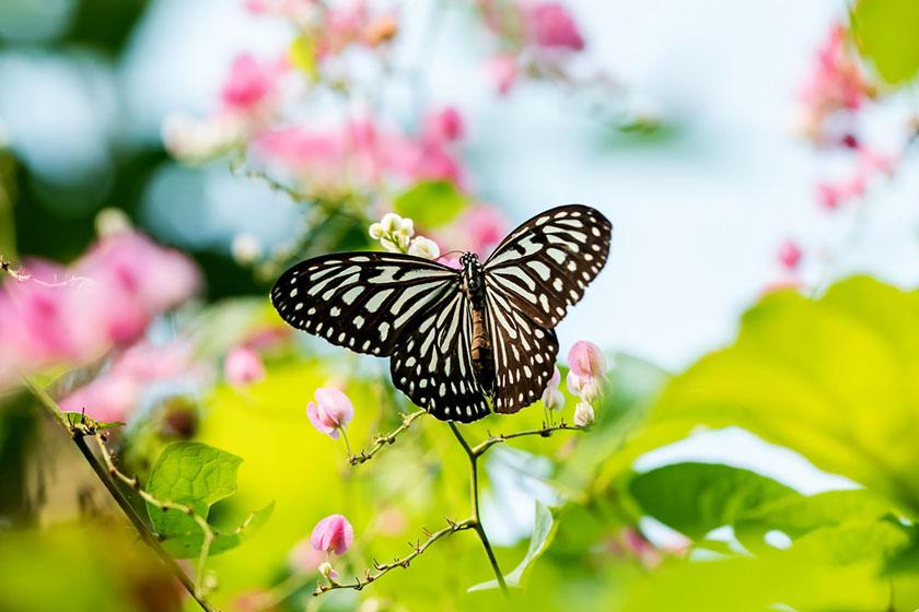 پارک پروانه کوالالامپور مالزی